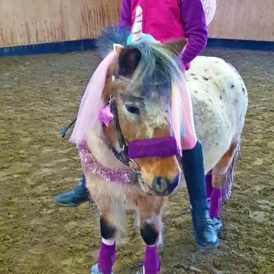 Pampula-poni puettuna yksisarviseksi
