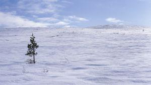 Vinterlandskap i Lappland.