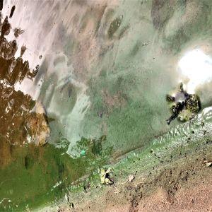 Grön sörja på en badstrand, sand och vatten, solgen skiner. Närbild.