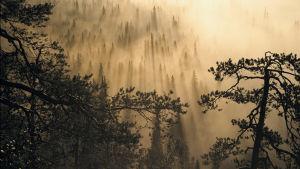 Valokuvaaja Tauno Kohonen pohdiskelee dokumenttielokuvassaan ihmisen ja luonnon suhdetta.