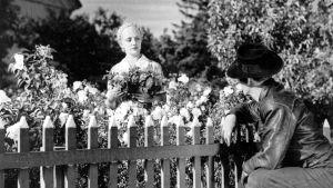Kino Tulio: Laulu tulipunaisesta kukasta