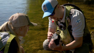 Jarkko Suominen ja Riikka Aaltonen tutkimassa kalojen ravintoa.