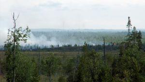 En brand i terrängen