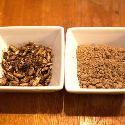 Syötäviä hyönteisiä