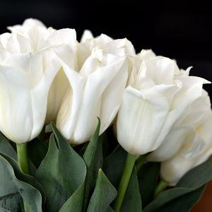 Den vita tulpanen Finland 100.