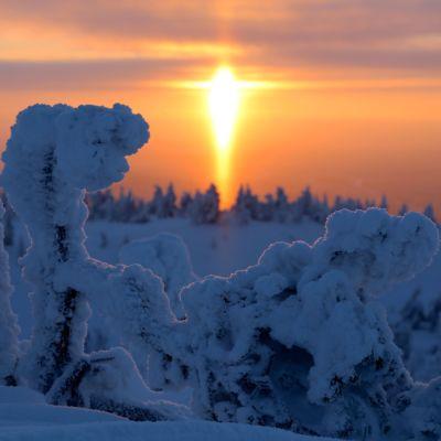 Etualalla paksun kuuran peittämää matalaa puustoa, taustalla auringon halo. Taivas on värjäytynyt okran eri sävyihin.