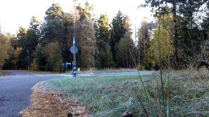 En korsning, barr ligger på asfalten, det syns gräs och skog, träd i höstfärger, trafikmärken, ett övergångsställe.