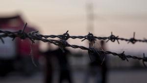 Taggtråd i flyktingläger.