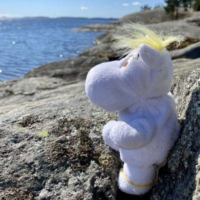 Snorkfrökenmjukisdjur på havsklippa.