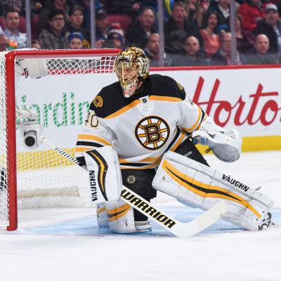 Tuukka Rask vaktar målet för Boston Bruins.