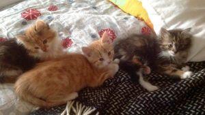 Tre kattungar på filt