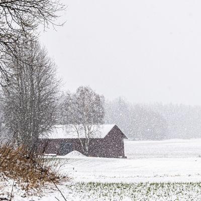 Sankka lumisade.