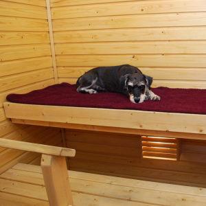 Kääpiösnautseri Iiro rakastaa saunomista. Tässä odotellaan joulusaunaan pääsyä. :)