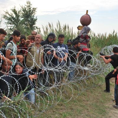 Syriska flyktingar försöker ta sig in till Ungern från Serbien.