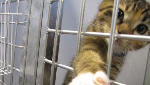 En kattunge i bur.