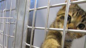 Många sommarkatter kommer till djurskyddshemmet