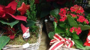 Julkorgar med julstjärna och höstglöd