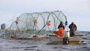 Laxfiske med ryssja i Bottenviken.