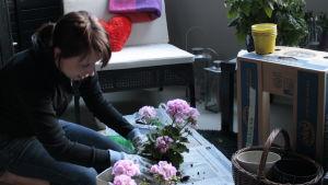 Mirka Saarela istuttaa parvekekukkia