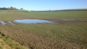 Viljapelto on osittain veden peitossa.