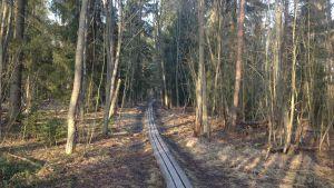 Stig går genom skog.