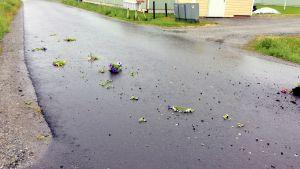 Harriet Eklund-Hortans blommor på vägen utanför huset.