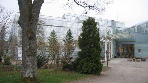 Botaniska trädgårdens växthus på Runsala.