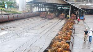 Lastningsområde vid en palmoljefabrik.