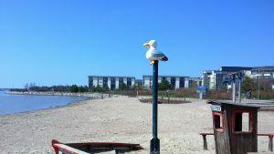Torsnäs badstrand i Hertonäs i Helsingfors.