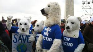 Isbjörnar i paraden