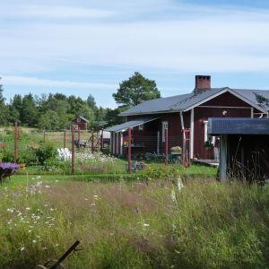 En del av Janne Grönings tomt, gård med mycket blommor och växter