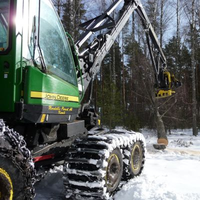En skogsmaskin som fäller ett träd en vinterdag.