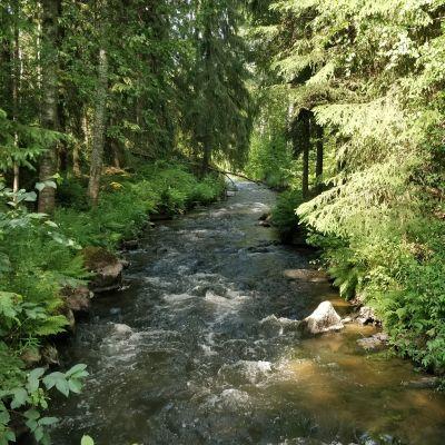 Rakkolanjoki on pari metriä leveä joki.