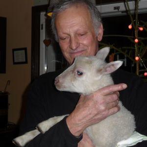 Rauli Ailus med ett litet vitt lamm i famnen. Bakom en julgran och juldekoration.