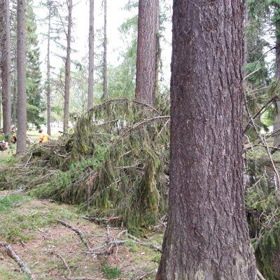 Kuvassa on kaatuneita puita Joensuun Linnunlahden leirintäalueella.