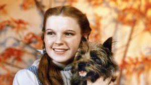 Närbild på Dorothy (Judy Garland) som sitter med hunden Toto i famnen.