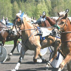 Hästar på Borgå trav