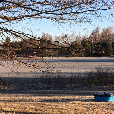 Puun okisen takana asfalttikenttä.