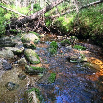 Jänislehdon puro Nurmeksessa on arvokas luontokohde.