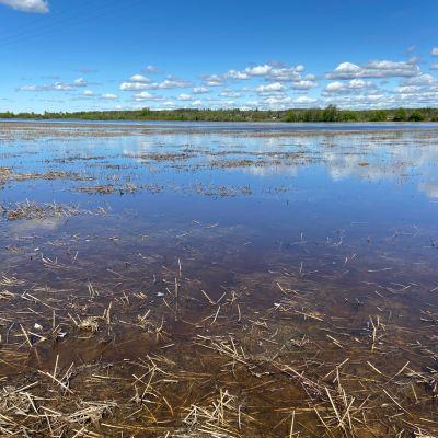 Lapuanjoen vesi on noussut pelloille Kauhavan Liinamaassa.