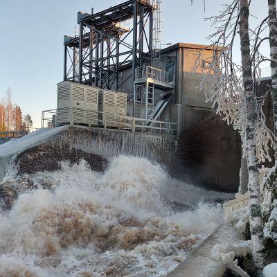 Järvilohien lisääntymislaue Kuuranassa ja vesivoimala.