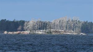 Merimetsojen valkeaksi kakkima saari