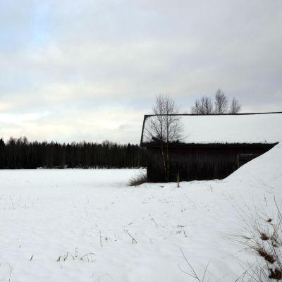 Snöbelagda åkrar. Wahlrooska hemmanet som ska bli hästsportcenter.