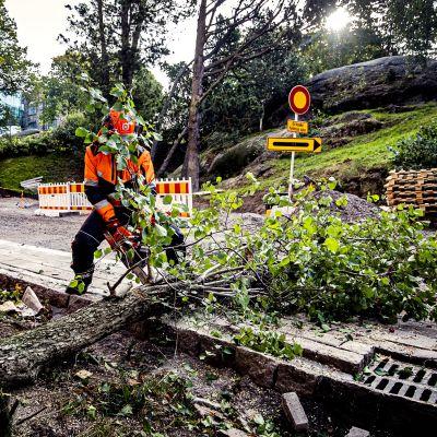 arbetare sågar ett träd som stormen aila fällt