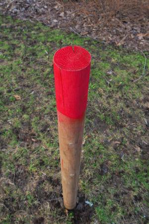 Keväisessä maassa puunvärinen, mutta punapäinen paksu kasvin tukikeppi yksikseen. Huomio kiinnittyy punaiseen värin kepin päässä.