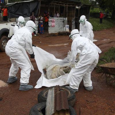 ebolamsittad