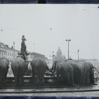 Koska elefantit joivat Havis Amandan suihkulähteestä? Olivatko janoiset norsut Moskovan suuren sirkuksen eläimiä vuonna 1968?