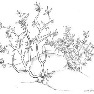 En illustration av ett träd som växer ur en kvinnokropp.