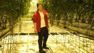 Johanna Smith ska provsmaka en tomat i sitt växthus