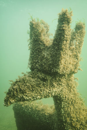 """Merieliöiden peittämä vedenalainen veistos """"Merikotka"""" Dalskär-saaren vedenalaisella veistospolulla."""